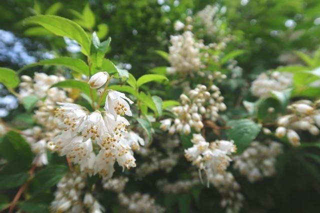 木々の周辺綺麗で可愛いお花