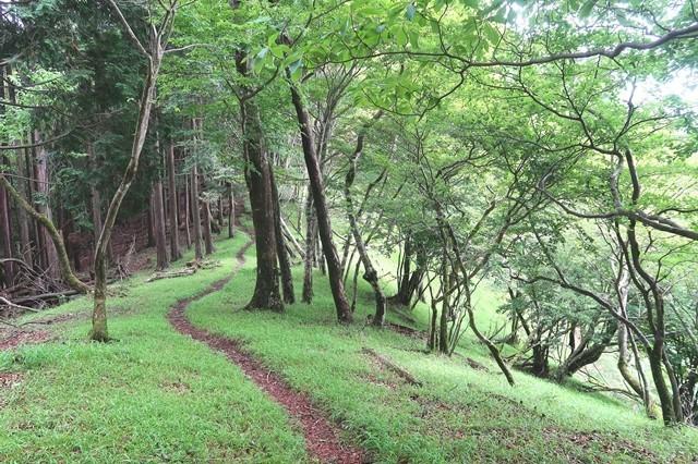 シャガクチ丸から水晶沢ノ頭までのルート樹林帯歩き
