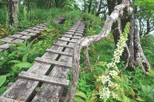 加入道山から大室山縦走ルートの木道