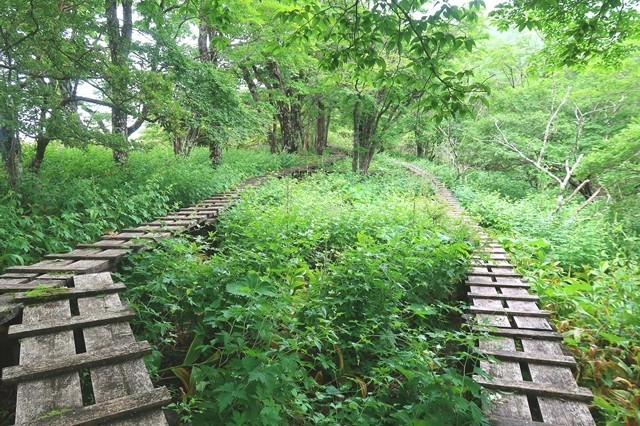 木道の整備大室山