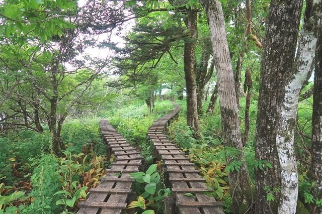 加入道山登山登山道木道