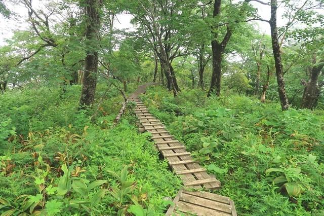 犬越路までのルート上の木道