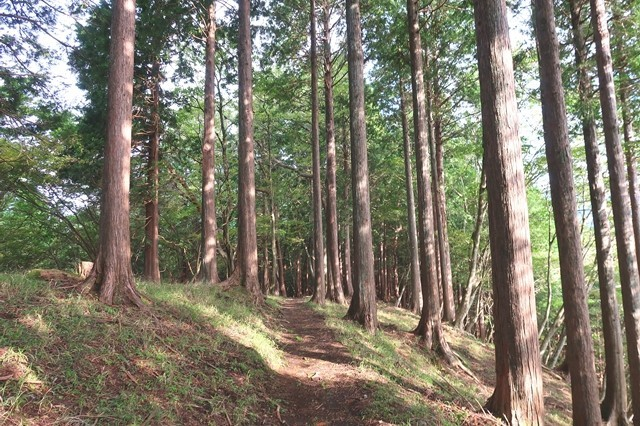 櫟山から栗ノ木洞ルート