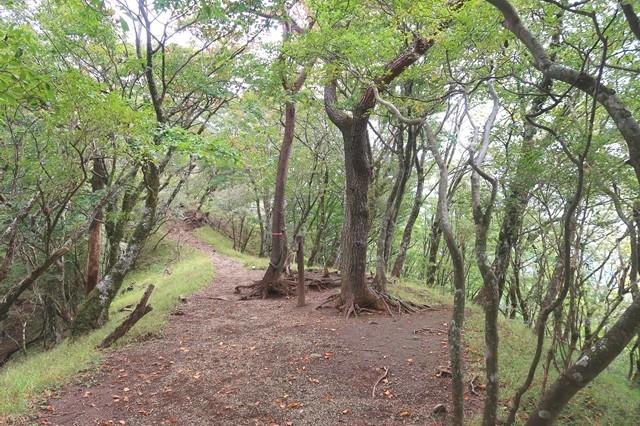 鍋割山のルート上の樹林帯