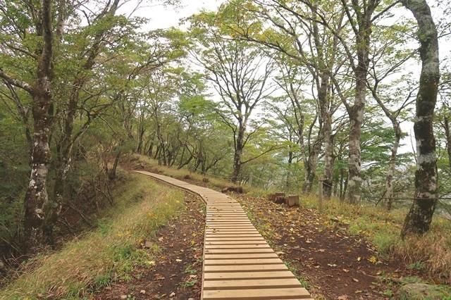 鍋割山の登山道木道箇所