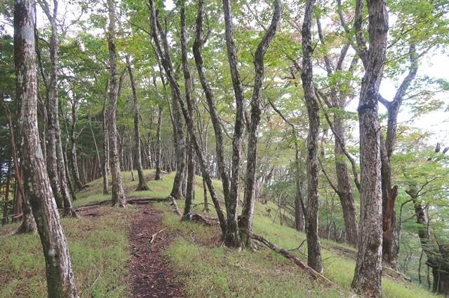 ブナ林広がる登山道
