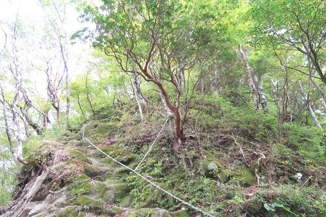 鍋割山から茅ノ木棚沢ノ頭を目指す場合は下りの鎖場で危ない