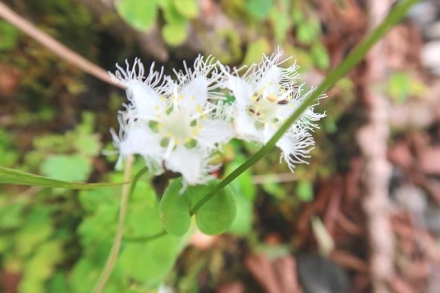 檜岳山稜のお花