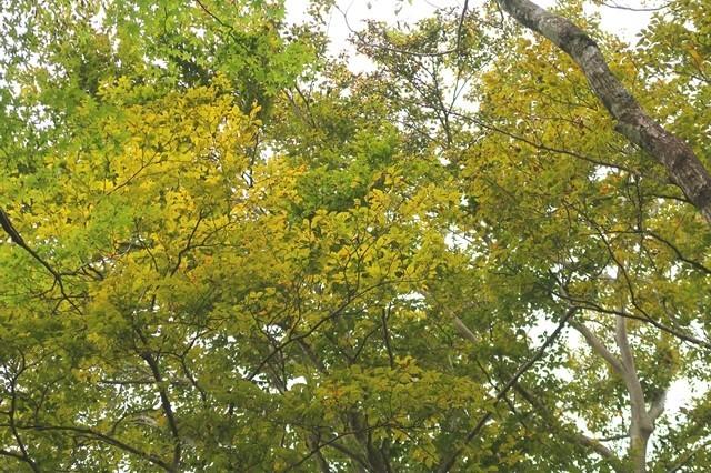 雨山から檜岳山稜ルート上の木々が紅葉