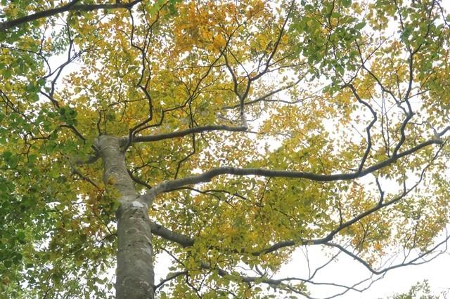 10月下旬頃が檜岳山稜の紅葉が綺麗