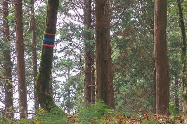 檜岳南東尾根の入口