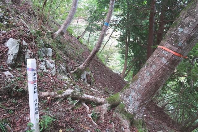 水源の森林の杭と秦野峠廃道ルート分岐