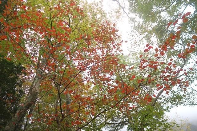 つつじ新道の紅葉