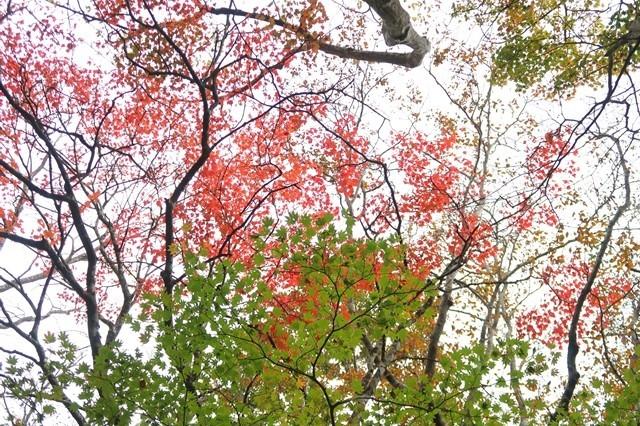 つつじ新道悪天候と紅葉の様子