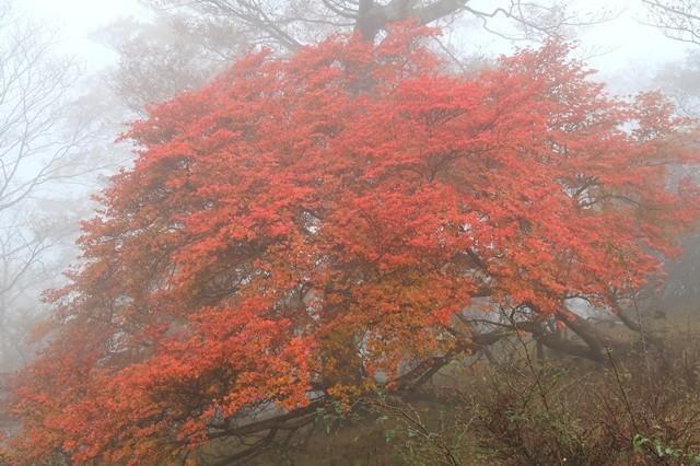 檜洞丸の山頂付近の紅葉