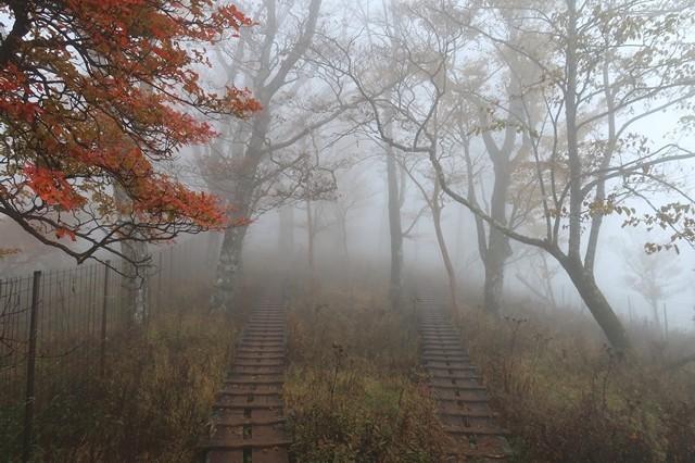 つつじ新道と石棚山稜の分岐の木道