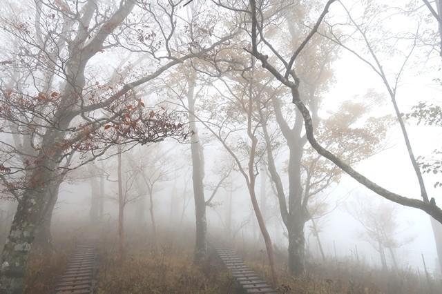 ツツジ新道から丹沢主稜縦走の木道ルート
