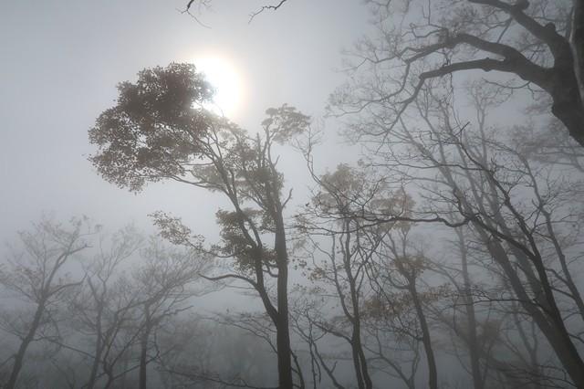 檜洞丸への登山道空の様子