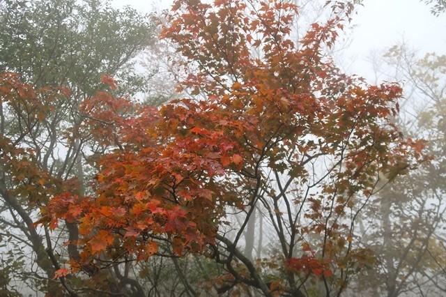 檜洞丸から蛭ヶ岳への登山道周辺の紅葉
