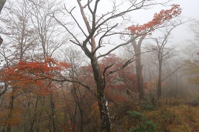秋の丹沢主稜縦走路