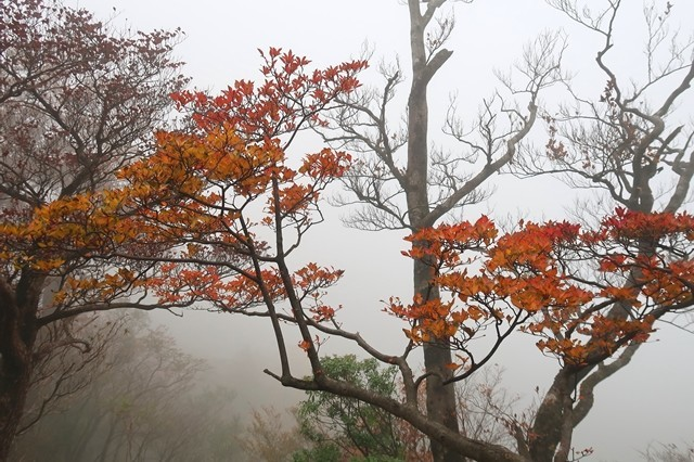 秋の丹沢主稜縦走路登山中に雨