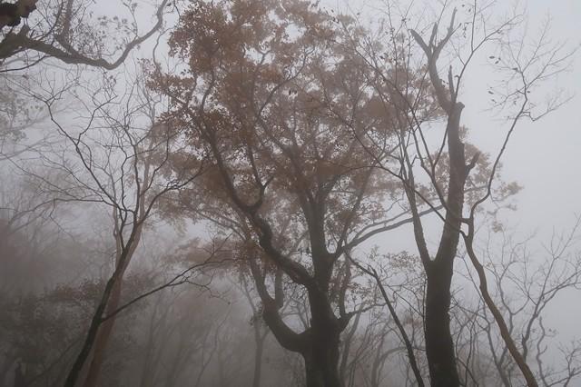 蛭ヶ岳への道のりの紅葉色づき具合
