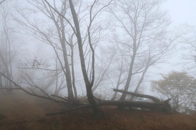 蛭ヶ岳への登山道にある倒れた木