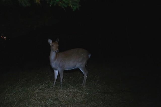 ナイトハイク中に撮影した野生動物