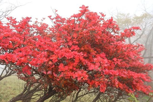 蛭ヶ岳鬼ヶ岩の紅葉