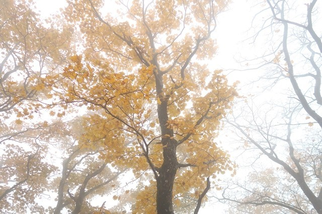 登山中の紅葉