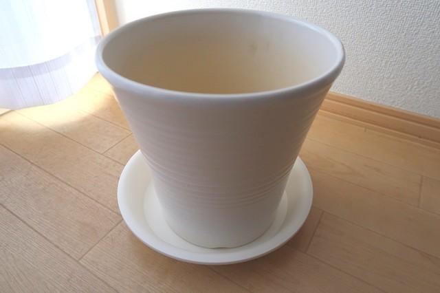 カポックの植え替えで購入した鉢と受け皿
