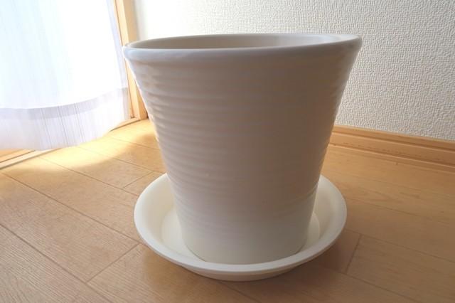 陶器製の鉢にカポックを植え替え