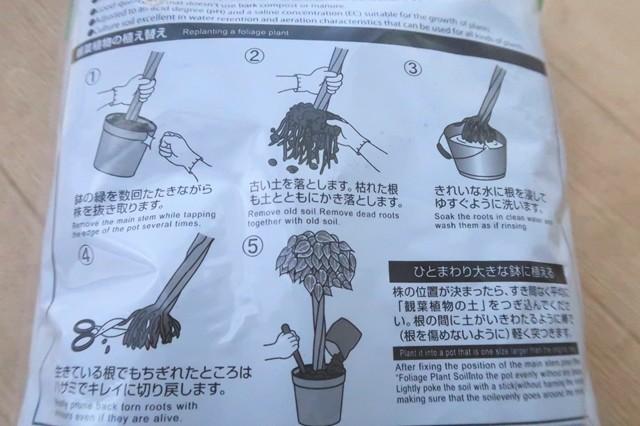 観葉植物等の鉢替えのやり方