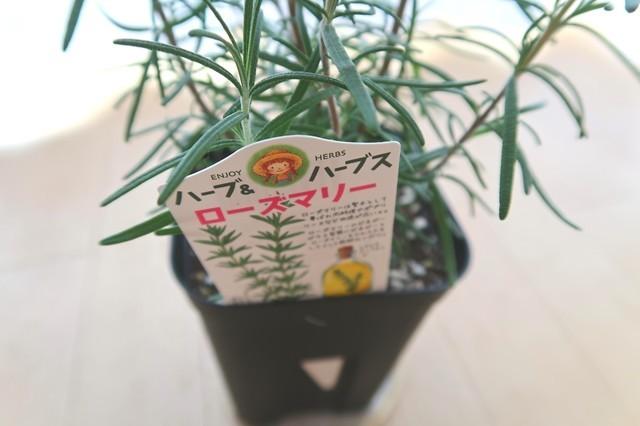 ローズマリーの育て方や植え付け・鉢替え記載内容