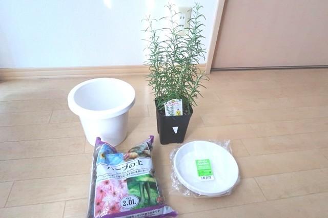ローズマリーの植え付け・鉢替えのやり方と必要な道具一式