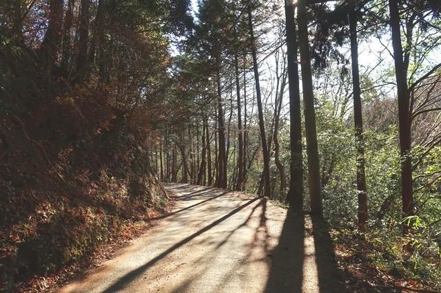 くらご峠から陣馬山の登山口である和田バス停ルートの様子