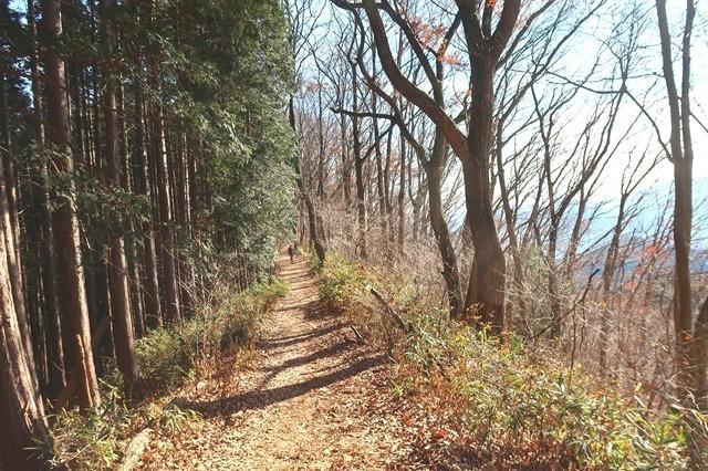 高尾山への縦走路
