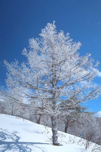 綺麗な根子岳登山道の霧氷