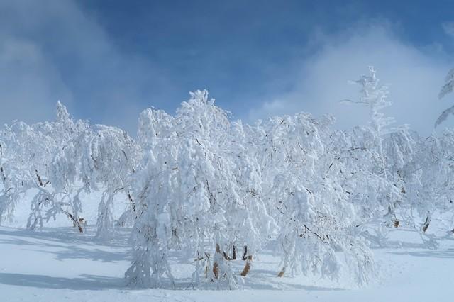 根子岳の霧氷、樹氷