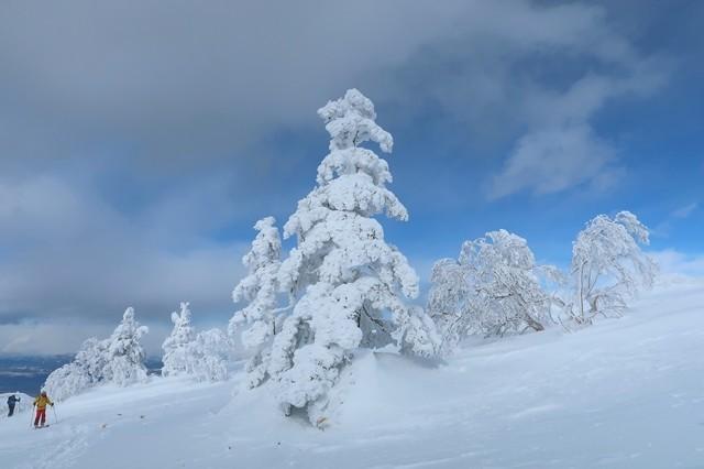 立派な樹氷