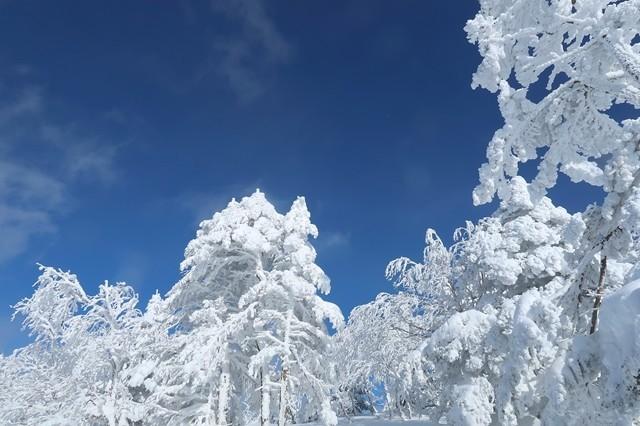 根子岳の樹氷群