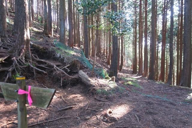 矢倉沢ルートの方向と周辺の様子