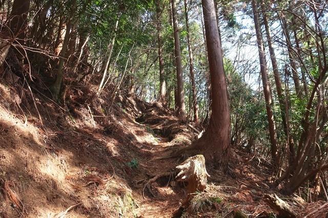 矢倉岳への登山道の様子