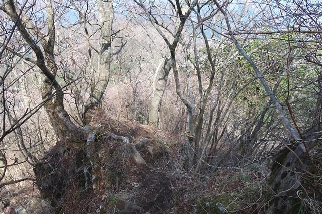 振り返っての金時山の登山道