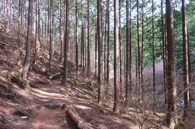 夕日の滝に至る足柄峠ハイキングコースの様子