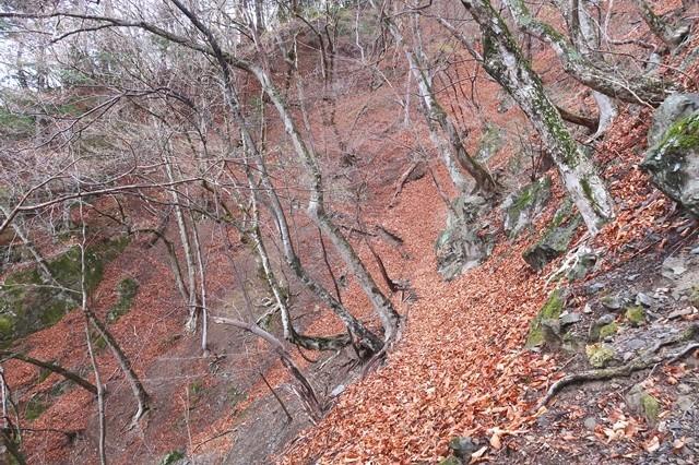 ヨモギ尾根(鉢焼場尾根)登山道の様子