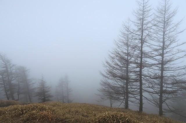 雲取山登山ルートの様子