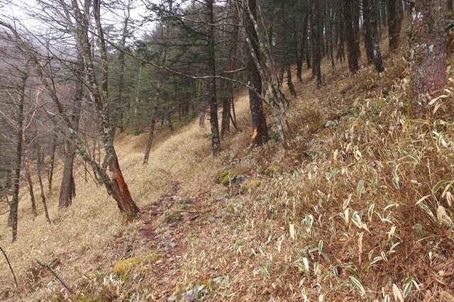 奥秩父主脈縦走路の登山道の踏み跡