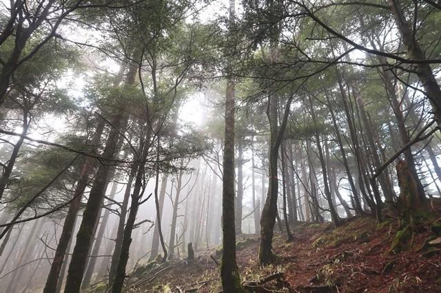 飛龍山への近道登山道