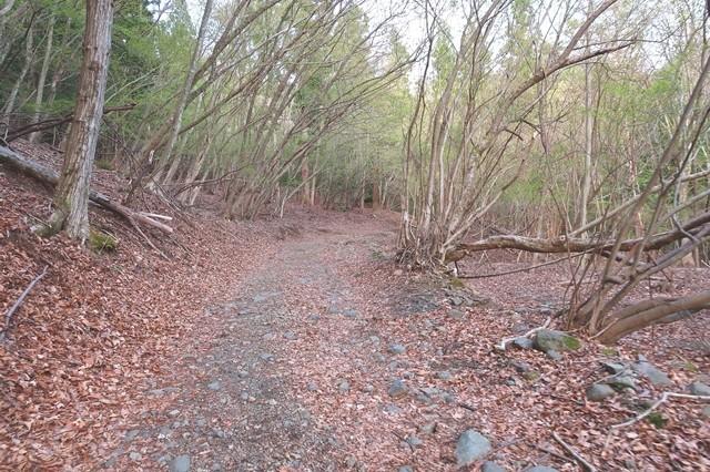 北口登山道の入口までの林道様子